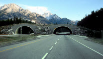 Trans-Canada-wildlife_overpass-resized