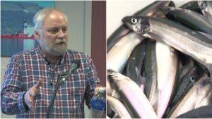 عالم البيئة بيار بيبان من وزارة الصيد والمحيطات الكنديّة يتحدّث عن مخزون سمك الكابلين/Radio-Canada
