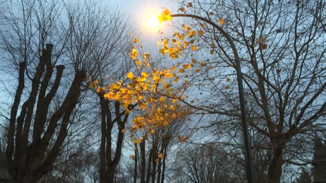 شارع في ريجاينا خلال فصل الخريف/ Demet Edeer