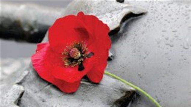 زهرة الخشخاش الرمز الرسمي ليوم الذكرى في كندا/Légion royale canadienne