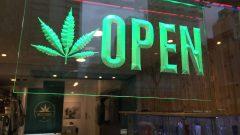 محلّ لبيع الماريجوانا/ Radio-Canada/David Horemans