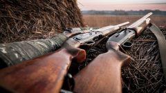 أسلحة صيد/آيستوك