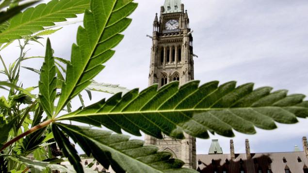 الماريجوانا على خلفية البرلمان/راديو كندا