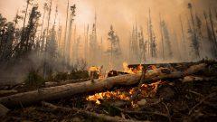 اللهب يتصاعد من جذوع الأشجار التي التهمتها حرائق الغابات في بريتيش كولومبيا/حرائق الغابات تجتاحعددا من المناطق في مقاطعة بريتيش كولومبيا/Darryl Dick/CP/CP