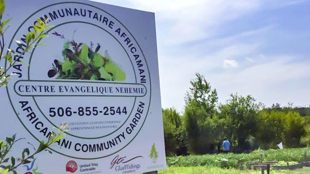 أفراد من الجالية الإفريقية في مونكتون يزرعون خضارا بنكهات إفريقية تمهد للاندماج بلطف/الصحافة الكندية