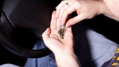 تأثير الماريجوانا على السائقين يستمرّ بعد ساعات على استهلاكها حسب دراسة جديدة/ambrozinio/Shutterstoc