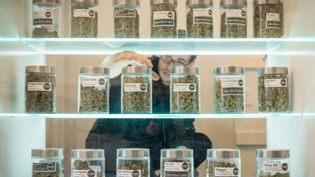 ازدهرت صناعة الماريجوانا منذ خول القانون المتعلّق بنشريعها لأغراض ترفيهيّة حيّز التطبيق في كندا/CBC/Evan Mitsfui