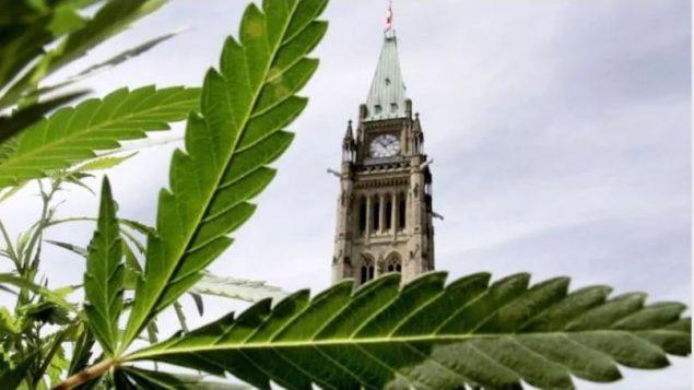 اتّخذت الحكومة الكنديّة سلسلة اجراءات لتأطير تشريع الماريجوانا/Radio-Canada / CBC
