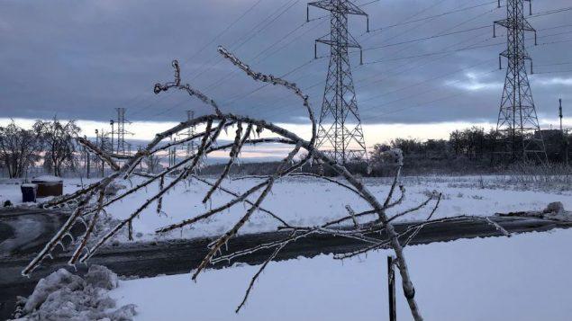 هوت أغصان الأشجار تحت تأثير سماكة الجليد في بعض مناطق جنوب كيبيك/Radio-Canada / Vincent Résseguier
