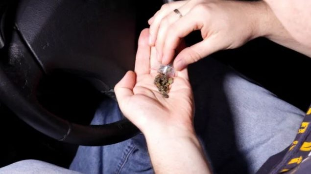 دخل تشريع الماريجوانا خيّز التنفيذ في كندا في 17 أكتوبر تشرين الأول 2018، إلا أن القيادة تحت تأثير المخدّرات هي مشكلة مستمرة لعقود - Ambrozinio / Shutterstock