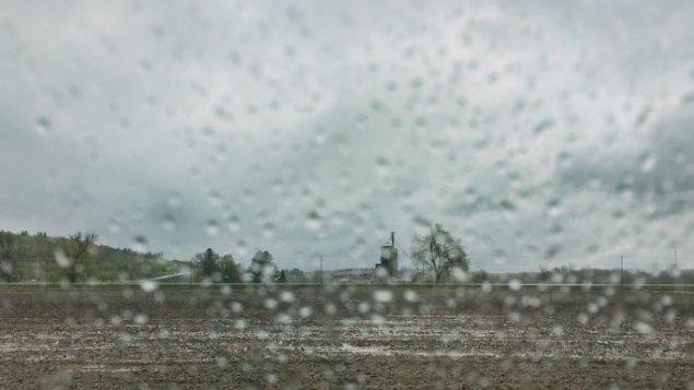 الطقس خلال هذا الربيع كان من بين الأسوأ على الاطلاق حسب المزارعين في أونتاريو/ Radio-Canada / Martin Bilodeau