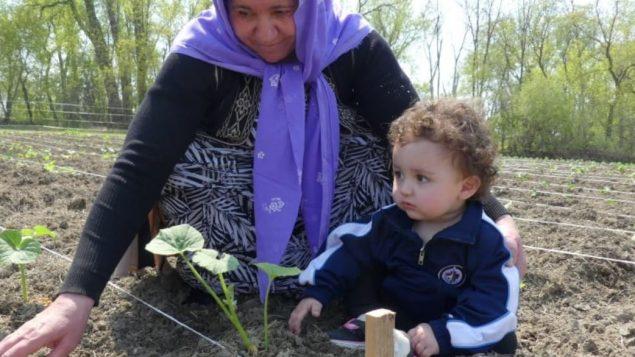 لاجئة من أبناء الطائفة اليزيديّة تستفيد من المبادرة الزراعيّة في وينيبيغ/Angela Johnston/CBC/هيئة الاذاعة الكنديّة