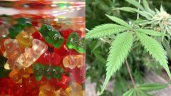 ترغب حكومة مقاطعة كيبيك في بذل المزيد من الجهود للحد من ابتذال الماريجوانا، وجاذبيتها للشباب - Justin Sullivan / Getty Images / Susan Montoya Bryan / Associated Press