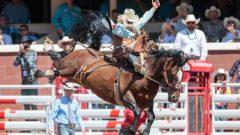 يدوم مهرجان ستامبيد تسعة أيام تتخلله مسابقات رعاة البقر والموسيقى والإثارة إلى غاية يوم الأحد 14 يوليو تمّوز الجاري - Bill Marsh Calgary Stampede /