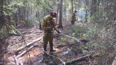 حكومة ألبرتا تعتزم مراجعة استعداداتها لمكافحة حرائق الغابات/ Alberta Wildfire)