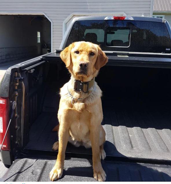 الكلبة زوي في سيارة الشرطة بعد العثور على الفتاتين/بيكتون غازيت