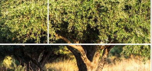 المزارع اللبناني وتطوير الزراعة اللبنانية لكي تصل إلى الأسواق العالمية هي في قلب الأهداف التي تسعى لتحقيقها منظمة التجارة العادلة في لبنان وقد أوكلت إلى الشاب كريستيان كامل مهمة ريادية لتشجيع القطاع الزراعي وتنشيطه في لبنان/موقع المنظمة الالكتروني