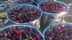 الاتّحاد الأوروبي سيباشر بتطبيق متطلّبات جديدة تؤدّي إلى وقف استيراد الكرز وفاكهة صغيرة أخرى من كندا/Glen Lucas