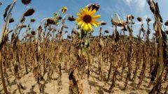 توقّعات اللجنة الدوليّة للتغيرات المناخيّة بشأن التغيّر المناخي والأمن الغذائي مقلقة/Arnd Wiegmann/Reuters