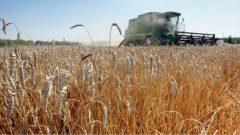 تغطّي حقول الذرة والصويا نصف المساحات الزراعيّة في كيبيك/Eric Albrecht/AP