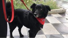 ثمانية كلاب تنتظر غدا رواد الكتبة العامة في فانكوفر وهم رهن إشارة أي زائر يريد خوض تجربة مرافقة كلب في نزهة إلى الحديقة/حقوق الصورة:RADIO-CANADA / ROSHINI NAIR