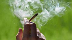بلغ عدد الكنديين الذين تتراوح أعمارهم بين 15 عامًا فما فوق والذين استهلكوا القنّب نحو من 4,9 مليون شخص - iStock