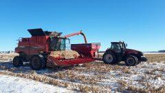 الثلوج المبكّرة أخّرت موسم الحصاد في كيبيك/Marie-Pier Mercier/Radio-Canada