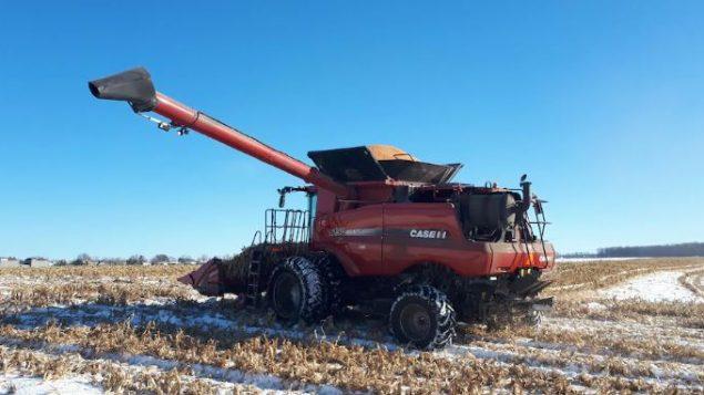 كميّات كبيرة من الذرة ما زالت تحت الثلج الذي أخّر موسم الحصاد في كيبيك/Hans Campbell/Radio-Canada