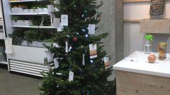 يمكن إعادة زرع شجرة الميلاد بعد الأعياد - Radio Canada / Dominique Lévesque