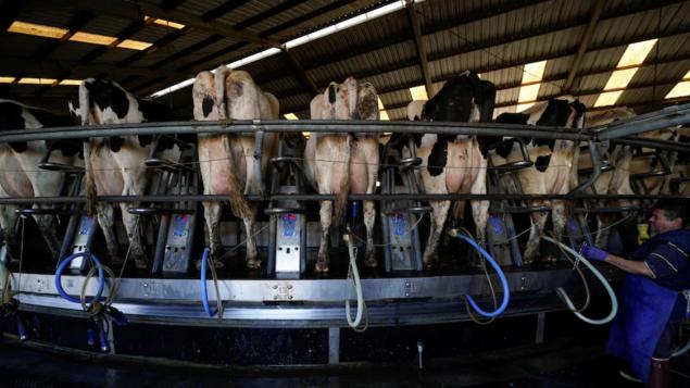 قطاع إنتاج الحليب الكندي لم يسلم من تداعيات مرض كوفيد-19/Mike Blake/Reuters
