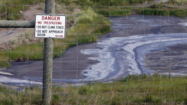 شركة إمبريال النفطيّة أعلنت عن نفوق 50 طائرا هبطوا في منطقة صرف مخلّفات النفط في شمال مقاطعة ألبرتا/Jeff McIntosh/CP