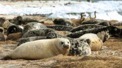 تعتزم  وزارة الصيد والمحيطات الكندية إصدار تنظيمات تتوافق مع تلك السارية في الولايات المتحدة – Paul Darrow / Reuters