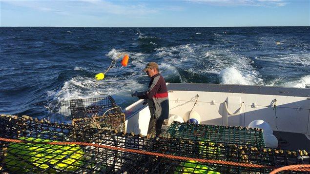 موسم صيد الكركند مهمّ للغاية للصيادين في مقاطعة نوفا سكوشا/ Clara Baillot/Radio Canada
