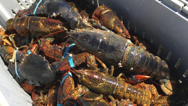 تزخر نوفا سكوشا بثروة من السمك وثمار البحر بما فيها الكركند، ويشكّل الصيد مصدر رزق للكثير من أبنائها/Radio-Canada
