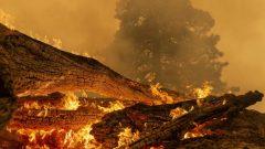شارك عناصر إطفاء من مقاطعة بريتيش كولومبيا في إخماد الحرائق في ولاية كاليفورنيا/David Mcnew/ Getty Images