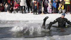 سباحة الدبّ القطبي خلال فصل الشتاء تقليد منتشر في كندا منذ عقود طويلة/Jeff McIntosh/CP