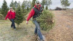 الاستعدادات لعيد الميلاد مبكّرة هذه السنة في كندا وسط جائحة فيروس كورونا المستجدّ/Graham Hughes/The Canadian Press