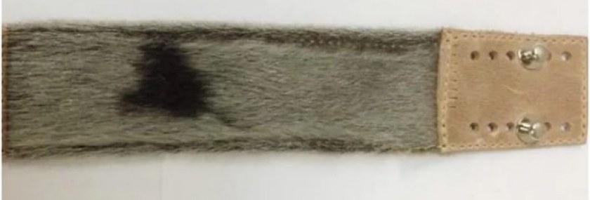 brazalete-inuk-635×357