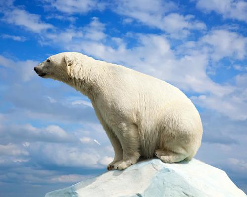北极熊奔跑的速度有多快?