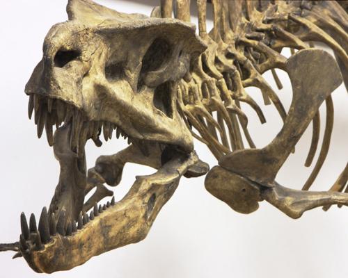 我们有丰富的恐龙化石…