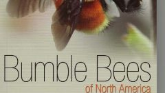 Sheila Colla co-author of Bumble Bees of North America (Click to Enlarge)
