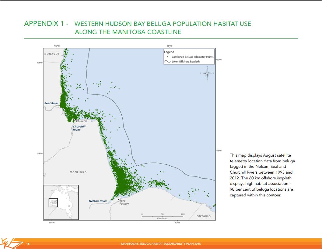 beluga map hudson bay