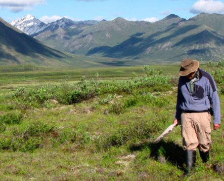McGill University entomologist Chris Buddle walks in the tundra during a research trip to the Canadian Arctic. Photo courtesy of Chris Buddle.