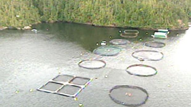 Aquaculture limitations of vaccines for Fish farm 3
