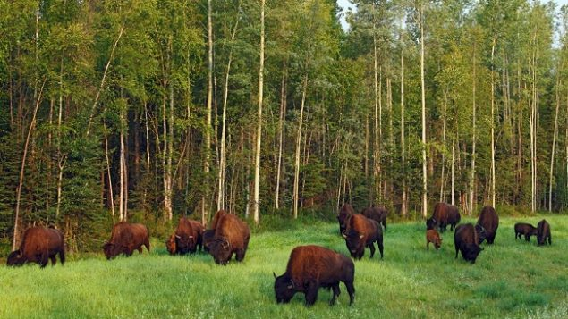 protection of a huge swath of boreal forest of global importance