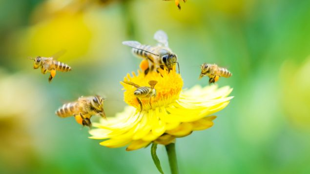EU bans another neonic insecticide, Canada stalls