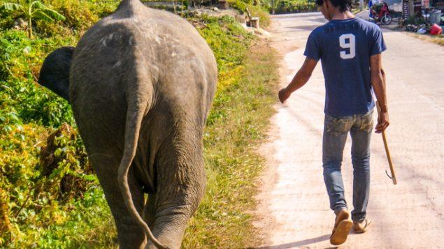 Wildlife tourism explodes, fuels animal abuse: magazine