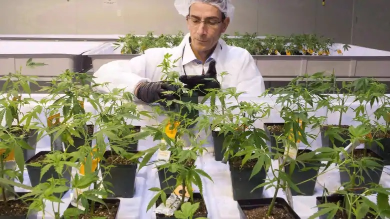 Pot tax: Figures are in on cannabis revenue for governments