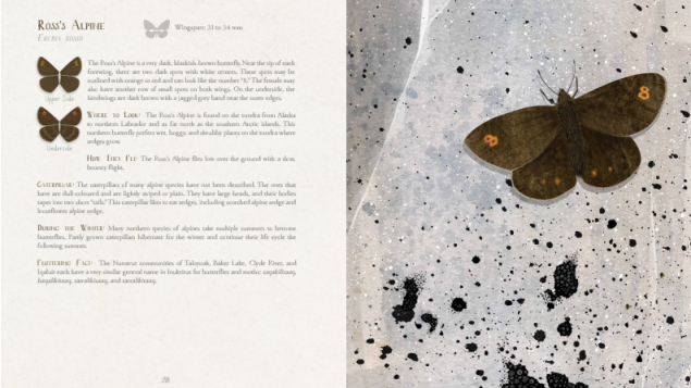 Arctic butterflies get the spotlight in new children's book