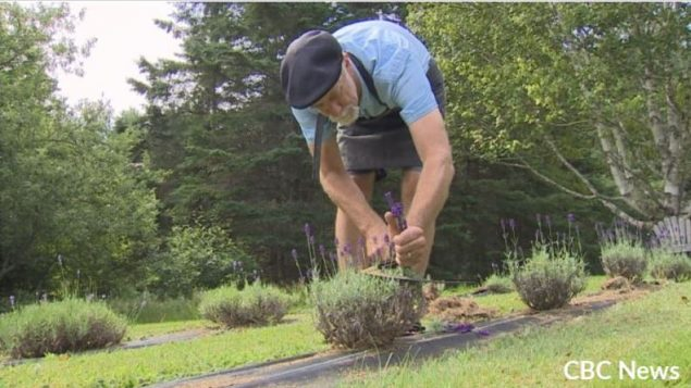 'Dream come true': Ontario couple moves to P.E.I. and sets up lavender farm